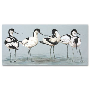 print of avocets