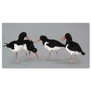 print of oyster catchers