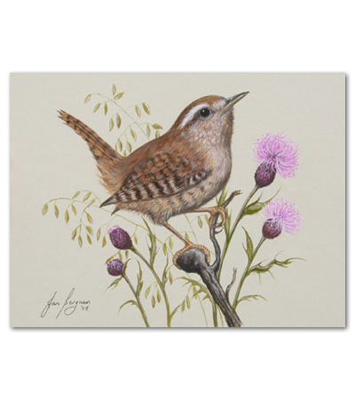 print of wren and thistle