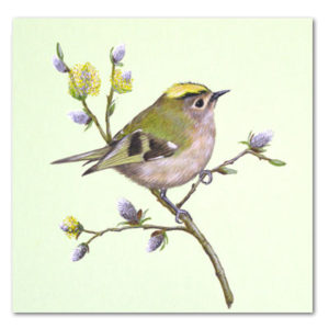 print of goldcrest