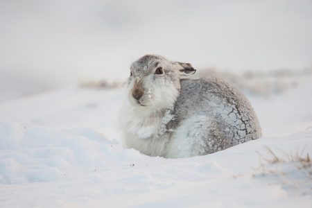 Shocking expose of mass killing of Scotland's mountain hares
