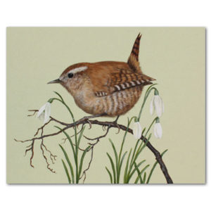 print of wren and snowdrops