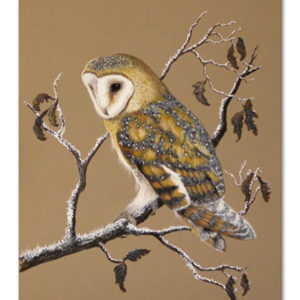 print of barn owl in winter