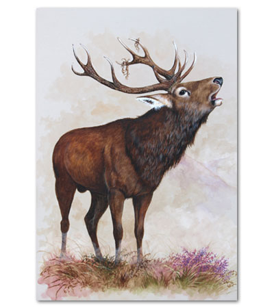print of stag in a rut