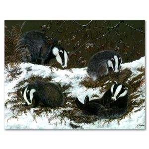 print of badgers