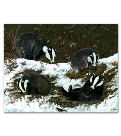 76-badgers
