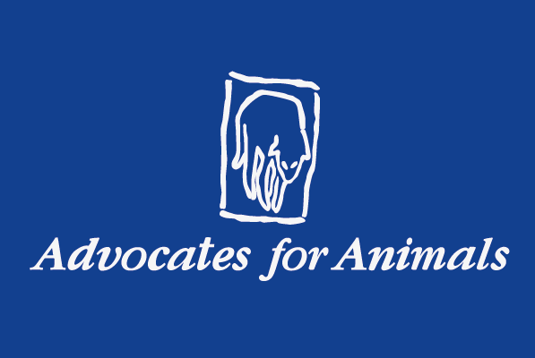 2010 – Advocates for Animals given charity status