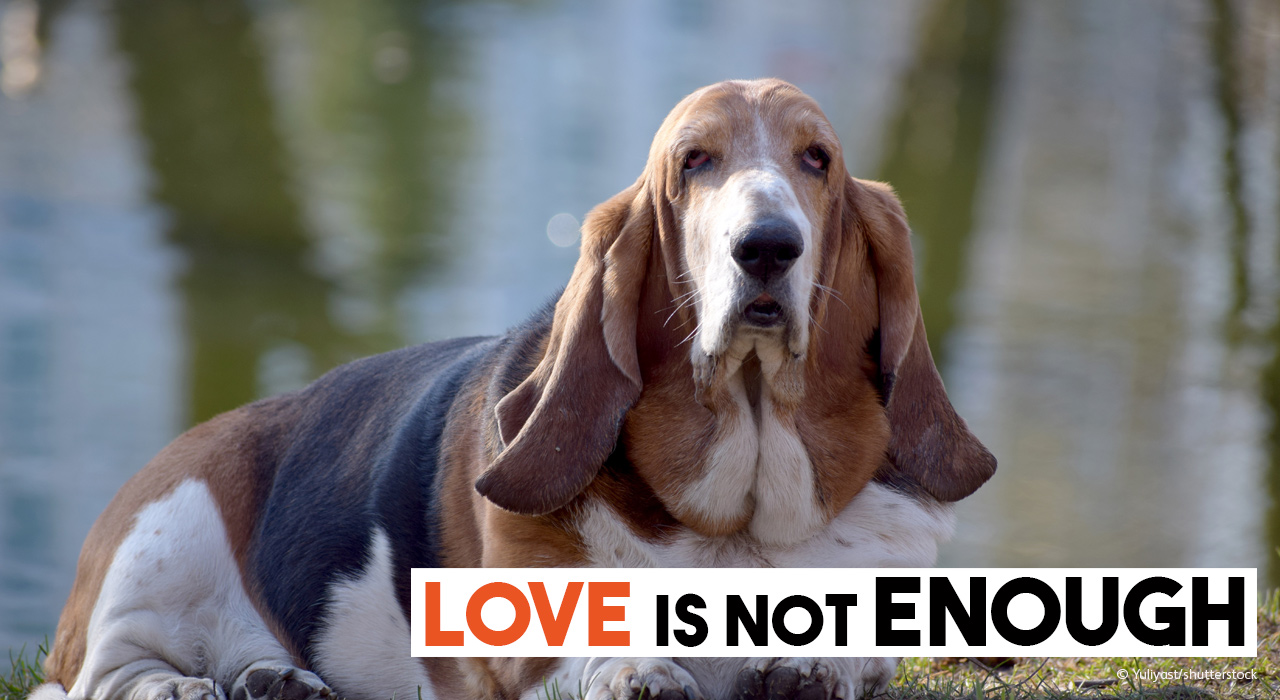 Basset Hound Love is not enougyh