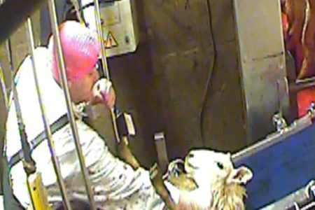 Scotland must follow suit and introduce mandatory CCTV in all slaughterhouses