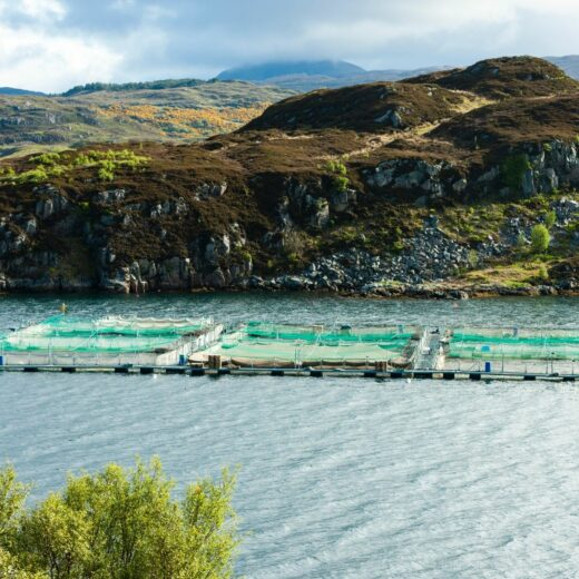 Salmon farms - Canva