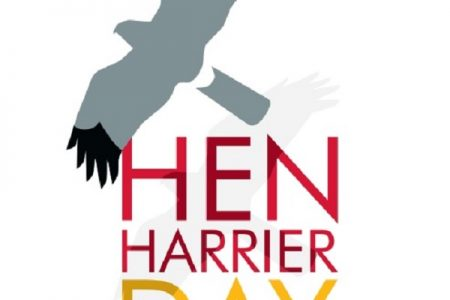 Why we're backing Hen Harrier Day