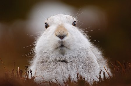 Gamekeepers invite First Minister to learn about hare culls