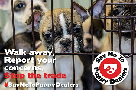 Let's all #SayNoToPuppyDealers