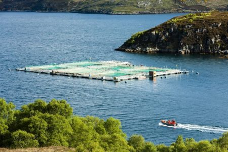 New report exposes serious welfare issues on Scottish salmon farms