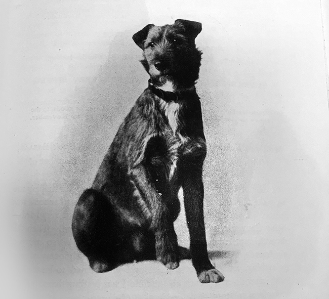 1913 – Irish Terrier known as 'Vivisected Jack' rises to fame