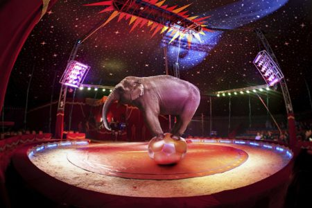 Scotland Bill to ban wild animal circuses comes close