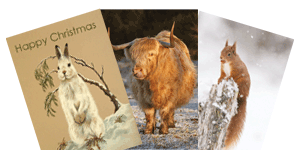 Christmas Cards for OneKind