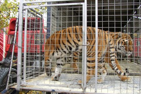 OneKind celebrates Scotland's commitment to ban wild animals in circuses