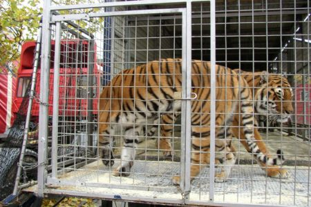 Charities celebrate Scottish Government's commitment to ban wild animals in circuses from Scotland