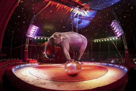 Campaigners welcome Scottish Bill to ban wild animal circuses