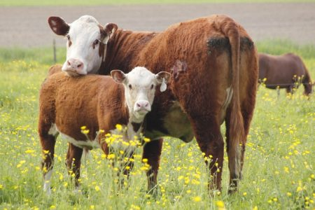 Animal sentience – why it's important and where next