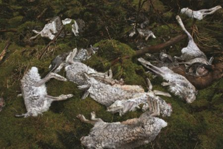 New data reveals urgent need to protect mountain hare