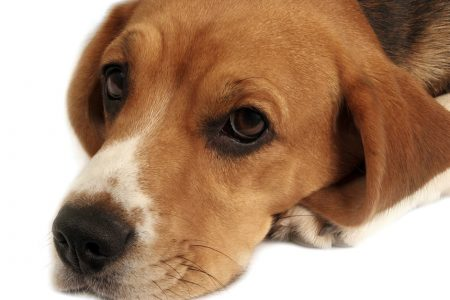 Facebook rules let animal abuse slip through the net