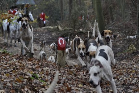OneKind calls on Scottish Government to make this year's Boxing Day hunts the last