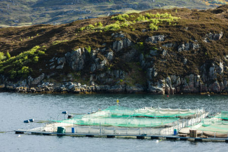New report highlights welfare issues of fish on Scottish salmon farms