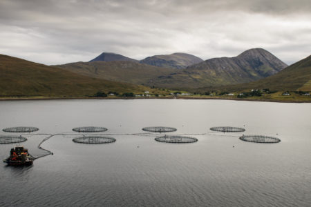 Five reasons why we are concerned about Scottish salmon farming