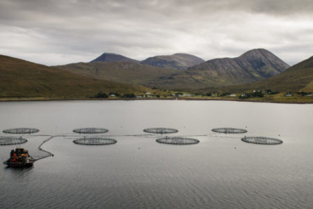 5 key facts we've learned from the Scottish fish farm production survey 2017