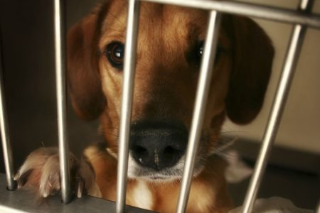 OneKind calls for a ban on third-party sales of dogs in Scotland