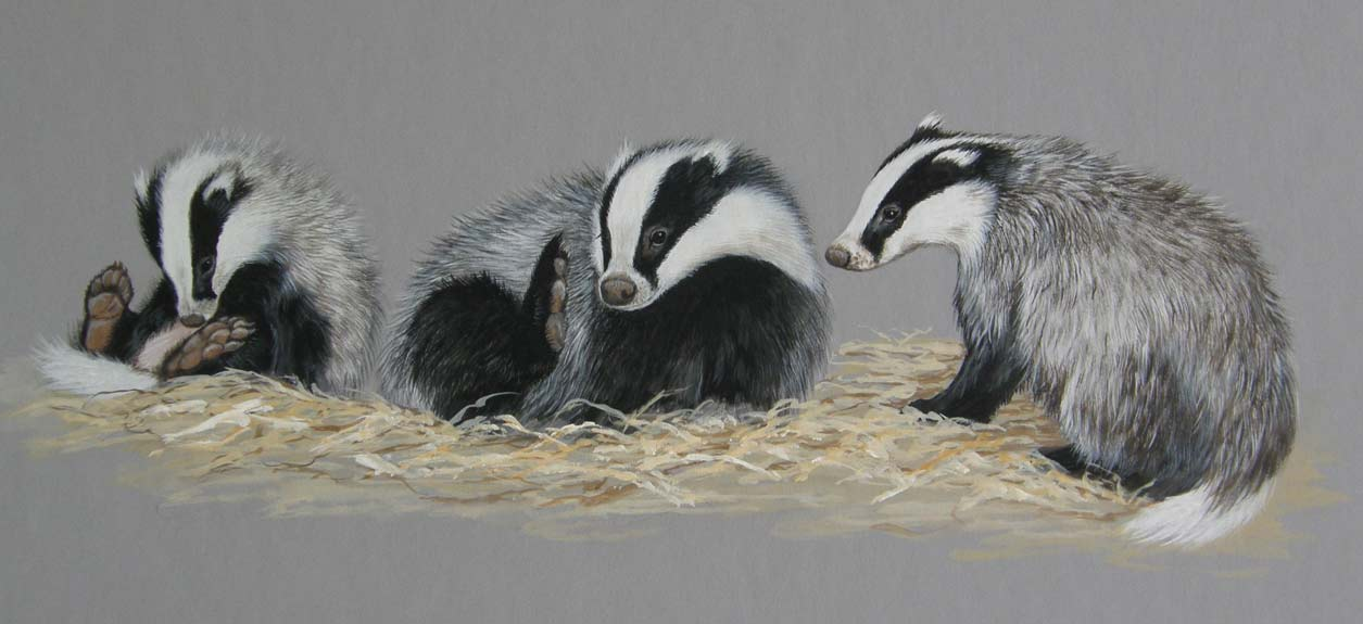 Badgers by Jan Ferguson