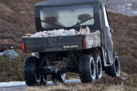 OneKind calls for urgent action as new evidence emerges of mass culling of of mountain hares