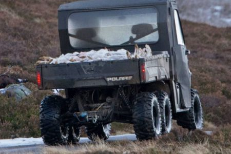 Mountain hare hunting cannot be ignored