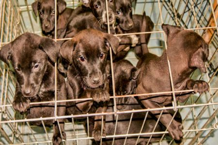 Scotland's first industrial puppy farm rejected