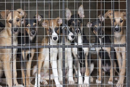 OneKind calls for ban on third-party sales of dogs in Scotland