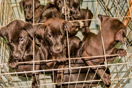 OneKind welcomes East Ayrshire Council decision to reject puppy farm