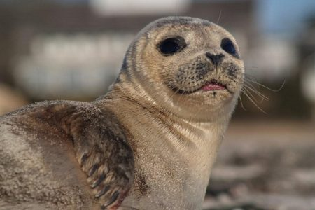 Concern for seal welfare in Scotland as new figures reveal suffering