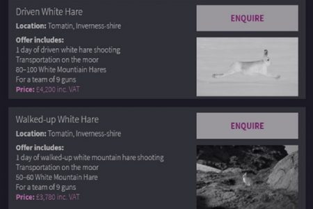 Are these admissions that mountain hare shooting is wrong?